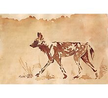 Painted Dog - African Wild Dog Photographic Print