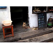 guard dog Photographic Print