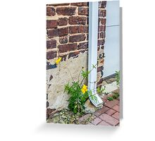 Nature Prevails Greeting Card