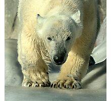 Running bear Photographic Print