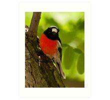"""Scarlet Robin"" Art Print"
