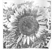 Vintage Sunflower artwork #3 Poster