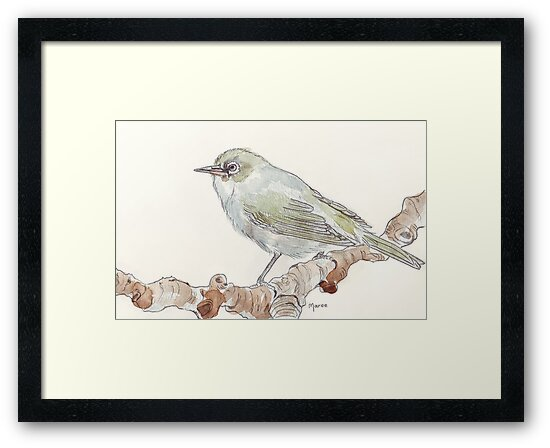 Cape White Eye (Witogie) by Maree Clarkson