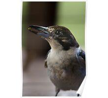 Butcherbird Poster