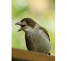 Juvenile Butcherbird Photographic Print