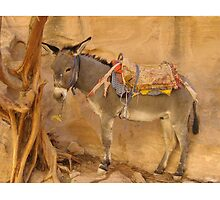 Donkey at Petra by staunto