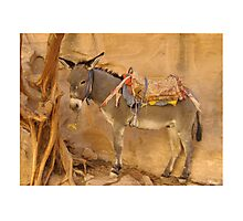 Donkey at Petra Photographic Print