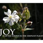 JOY by staunto