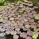 The Lilly Pond by Edward Denyer