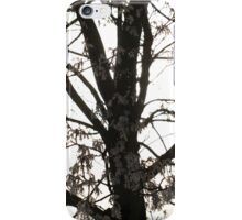 Cold Tree iPhone Cover iPhone Case/Skin