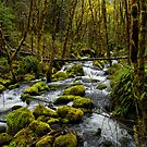 I Love Green by Charles & Patricia   Harkins ~ Picture Oregon