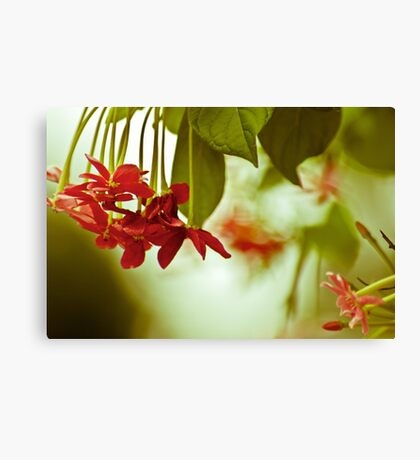 Passionate...Got 4 Featured Works Canvas Print