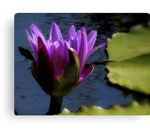 A Hint Of Purple ~ Part One Canvas Print