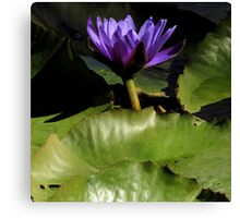 A Hint Of Purple ~ Part Two Canvas Print