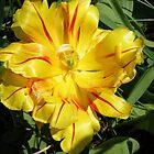 Yellow Brillance - Bold and Beautiful by GoldFox9478