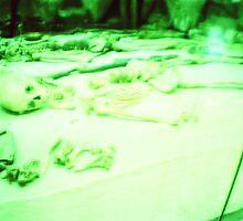 Museum bones by Holly Burns