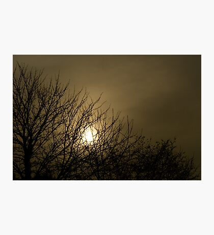 Bare Mystery Photographic Print