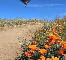 hot air balloon with poppies by Karol Franks