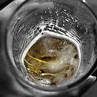 Beer by nicholas stewart