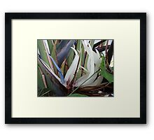 Tropical Blossom In The Winter - Flor Tropical En El Invierno Framed Print