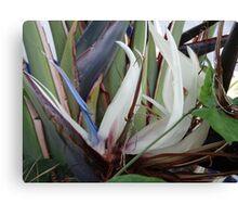 Tropical Blossom In The Winter - Flor Tropical En El Invierno Canvas Print