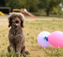 ...Boucle with balloons........... by Jane Anastasia Studio