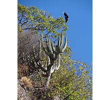 Cactus With Vulture - Cactus Con Buitre Photographic Print
