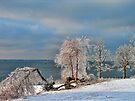 Ice Storm Aftermath by Carolyn  Fletcher