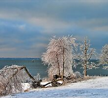 Ice Storm Aftermath by Carolyn  Fletcher