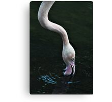 A Long Neck Canvas Print