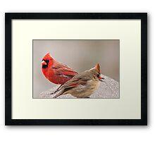 Female and Male Cardinal Framed Print