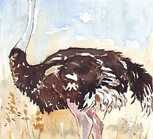 Struthio camelus (Ostrich) by Maree Clarkson