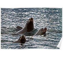 BARKING SEA LIONS Poster