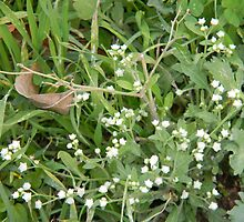 False Ragweed Plant by Navigator