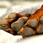 The Paw Thing! by Alison Hill