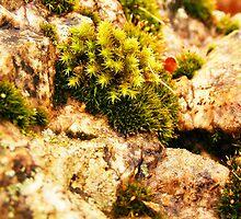Moss & Rock by shimschoot