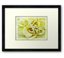 Dreamy Light Yellow Rose - Stamens & Petals Close-up ~ Framed Photography Framed Print