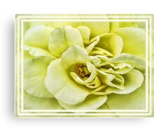 Dreamy Light Yellow Rose - Stamens & Petals Close-up ~ Framed Photography Canvas Print
