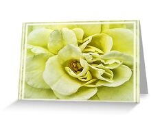 Dreamy Light Yellow Rose - Stamens & Petals Close-up ~ Framed Photography Greeting Card