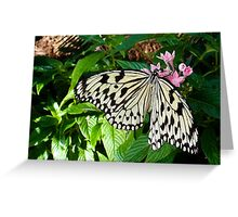 Spreading Wings Greeting Card