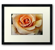 Whiskey Rose ~ Smoky and Sensuous Framed Print