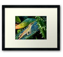 Lizard on a Cactus Framed Print