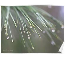 Rain Check Poster