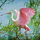 Just love those pink wings . . . by Bonnie T.  Barry