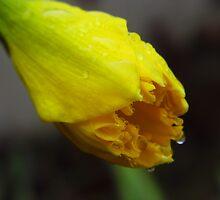 Almost A Flower by WildestArt