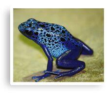 Blue poison arrow frog Canvas Print