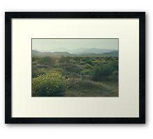 Spring Flowering Desert Framed Print