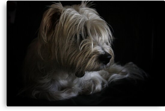 Rosco in natural light by Tam  Locke