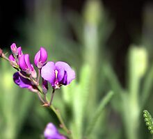 Lavender plant with purple flower by Vaillettephoto