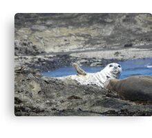 "Seal saying, ""hello"". Canvas Print"